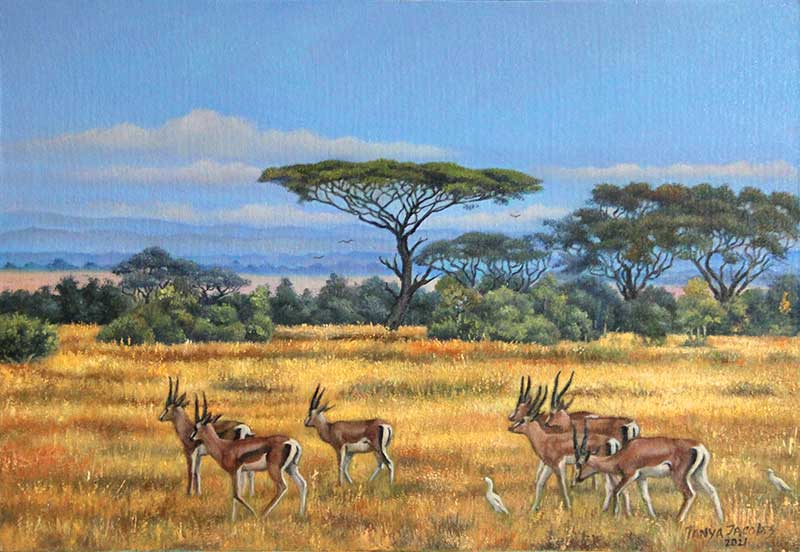 African Savanna with Springboks